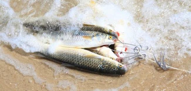 Риболовля на Азовському морі. Ловля пеленгаса.